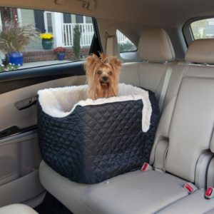 traveling with yorkie